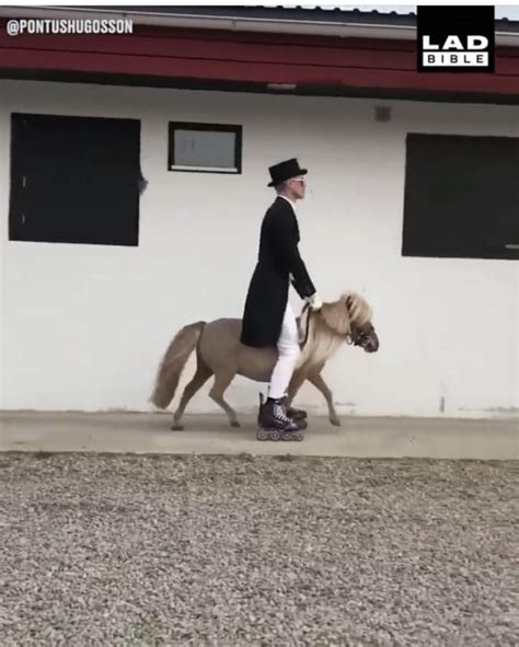 Tuesday Video: Riding on Wheels | HORSE NATION