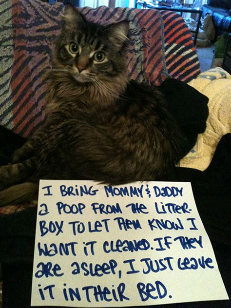 The 27 Naughtiest Cats In The World (Hilarious Cat Shaming