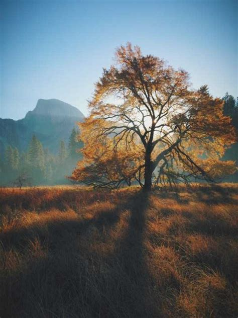 45 Awesome Landscape Photos Taken With an iPhone (45