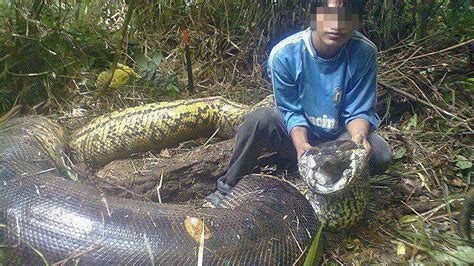 World Biggest Snake Ever Caught in all times 2017 - YouTube